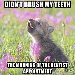 Baby Insanity Wolf - didn't brush my teeth  the morning of the dentist appointment