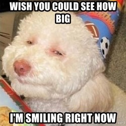 Troll dog - Wish you could see how big I'm smiling right now