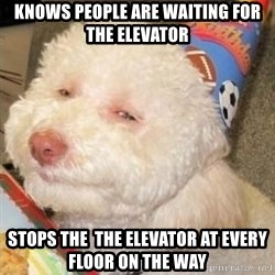 Troll dog - knows people are waiting for the elevator stops the  the elevator at every floor on the way