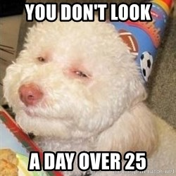 Troll dog - YOU DON'T LOOK  A DAY OVER 25