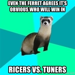 Obvious Question Ferret - even the ferret agrees it's obvious who will win in  ricers vs. tuners