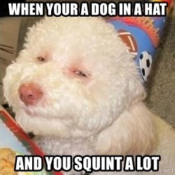 Troll dog - when your a dog in a hat and you squint a lot