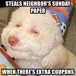 Troll dog - steals neighbor's sunday paper when there's extra coupons