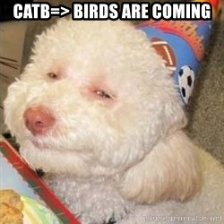 Troll dog - CATB=> birds are coming
