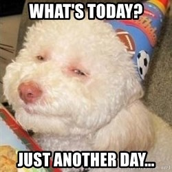 Troll dog - What's today? Just another day...