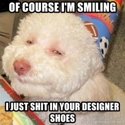 Troll dog - Of course I'm smiling I just shit in your Designer Shoes