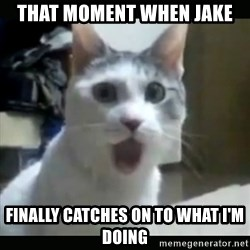 Surprised Cat - That moment when Jake Finally catches on to what I'm doing