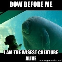 Overlord Manatee - Bow before me I am the wisest creature alive