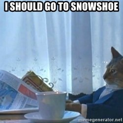 Sophisticated Cat - I should go to snowshoe