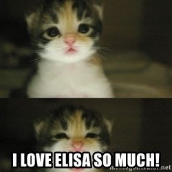 Adorable Kitten -  I love Elisa so much!
