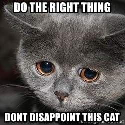 sad cat - Do the right thing dont disappoint this cat