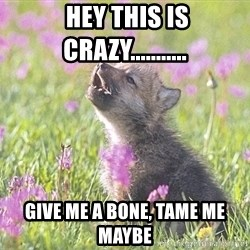 Baby Insanity Wolf -  Hey this is crazy........... Give me a bone, tame me maybe