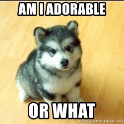 Baby Courage Wolf - Am I adorable  Or what