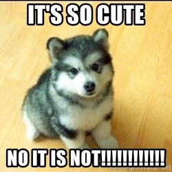 Baby Courage Wolf - it's so cute  no it is not!!!!!!!!!!!!