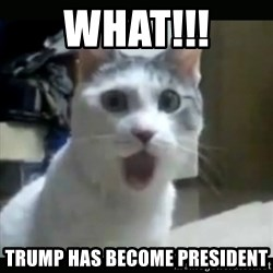 Surprised Cat - What!!! Trump has become president