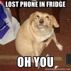 Oh You Dog - Lost phone in fridge Oh you