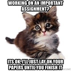 fyeahpussycats - Working on an important assignment? Its Ok, i'll just lay on your papers until you finish it