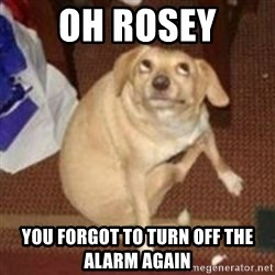 Oh You Dog - Oh Rosey You forgot to turn off the alarm again
