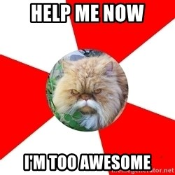 Diabetic Cat - Help me Now i'm too awesome