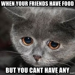sad cat - when your friends have food but you cant have any