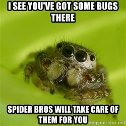 The Spider Bro - I see you've got some bugs there Spider Bros will take care of them for you