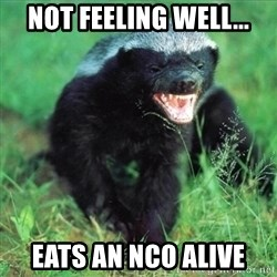 Honey Badger Actual - Not feeling well... Eats an NCo Alive