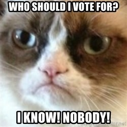 angry cat asshole - who should i vote for? i know! nobody!