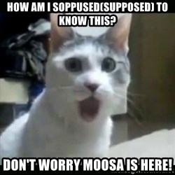 Surprised Cat - How am i soppused(supposed) to know this? Don't worry moosa is here!