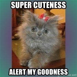 cute cat - Super cuteness  Alert my Goodness