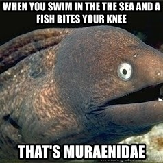 Bad Joke Eel v2.0 - When you swim in the the sea and a fish bites your knee That's Muraenidae