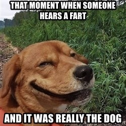 dogweedfarm - that moment when someone hears a fart and it was really the dog