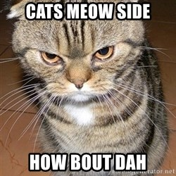angry cat 2 - Cats meow side How bout dah