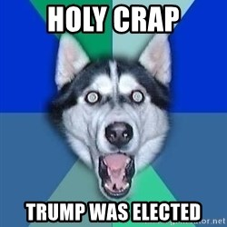 Spoiler Dog - Holy crap trump was elected
