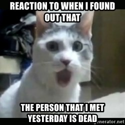 Surprised Cat - REACTION TO WHEN I FOUND OUT THAT  THE PERSON THAT I MET YESTERDAY IS DEAD