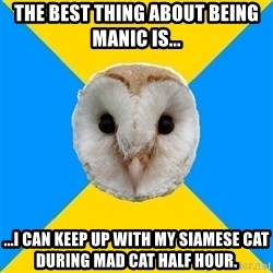 Bipolar Owl - The best thing about being manic is... ...I can keep up with my siamese cat during mad cat half hour.