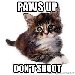 fyeahpussycats - Paws Up Don't Shoot