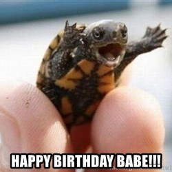 angry turtle -  happy birthday babe!!!