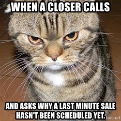 angry cat 2 - When a closer calls  and asks why a last minute sale hasn't been scheduled yet.