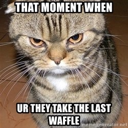 angry cat 2 - that moment when ur they take the last waffle