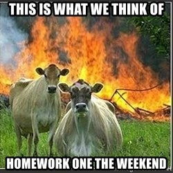 Evil Cows - This is what we think of homework one the weekend