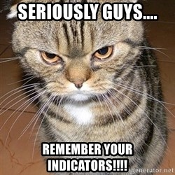 angry cat 2 - Seriously guys.... Remember your indicators!!!!