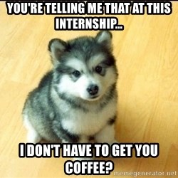 Baby Courage Wolf - You're telling me that at this internship... i don't have to get you coffee?