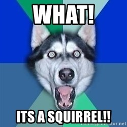 Spoiler Dog - what! its a squirrel!!
