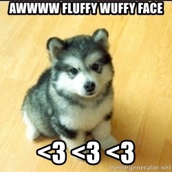 Baby Courage Wolf - awwww fluffy wuffy face <3 <3 <3