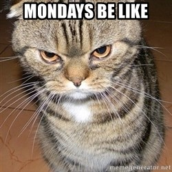 angry cat 2 - mondays be like