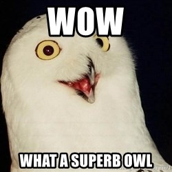 O Rly Owl - Wow What a superb owl