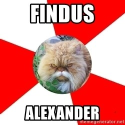 Diabetic Cat - FINDUS ALEXANDER