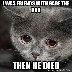 sad cat - I was friends with gabe the dog then he died
