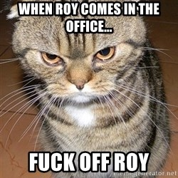 angry cat 2 - When Roy comes in the office...  Fuck off roy