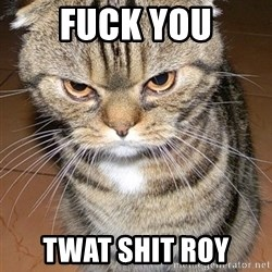angry cat 2 - Fuck You TWat shit roy